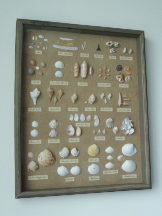 a shadow box for my shells