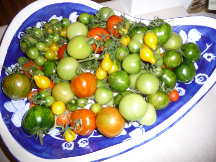 the last tomatoes of 2009