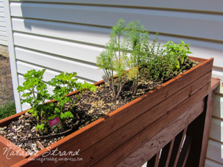 herbs on the porch railing