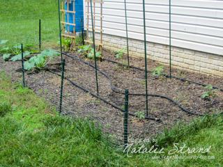 2013_06_08_irrigationhose2-Edit