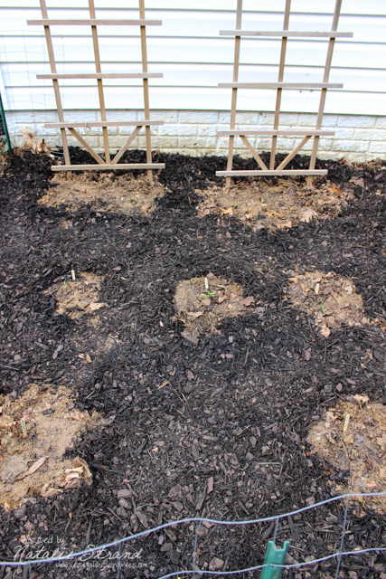 cucumber seeds planted at base of trellises, pepper plants in the three middle spots, and zucchini seeds planted in the two foreground spots.