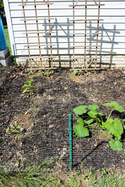 cucumbers in background, peppers in middle, zucchini in front