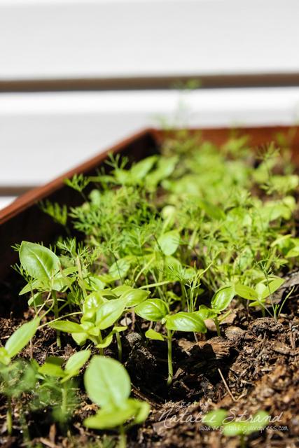 2014_06_14_herbs02-Edit