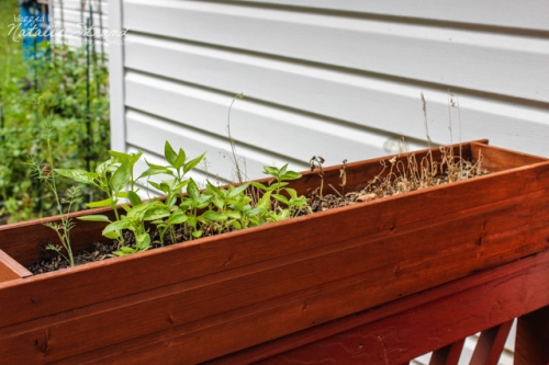 Well, you can tell which half of the herb box is under the overhang...  whoops.