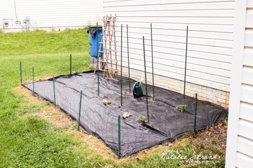 2015_05_13_gardenplanting01-Edit