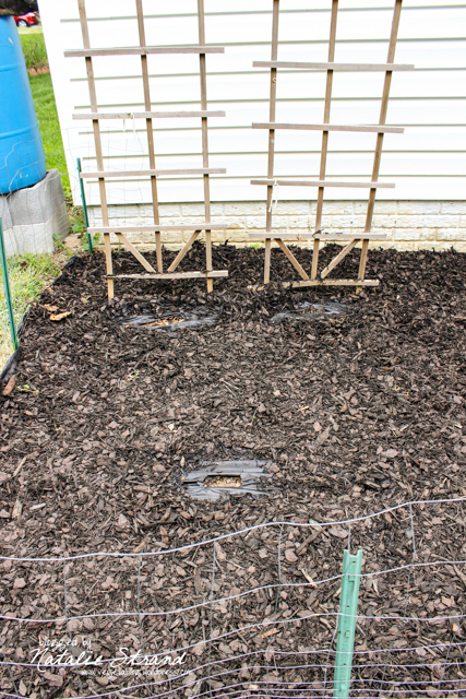 Garden planted and mulched!  Cucumber seeds (background) and zucchini seeds (foreground) planted.