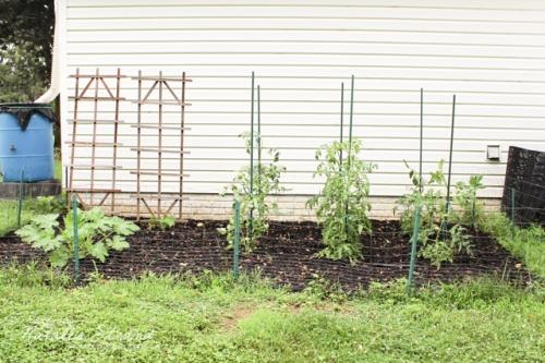 healthy garden!