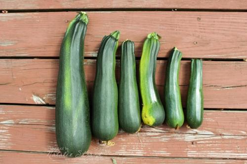 Wow! Lots of zucchini!