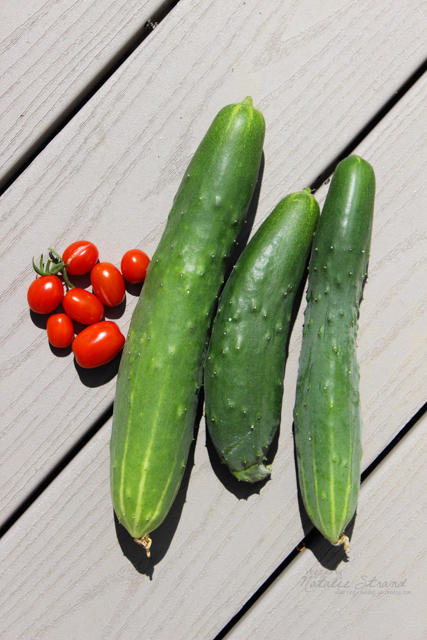 First harvest! A tiny handful of grape tomatoes and three cucumbers.