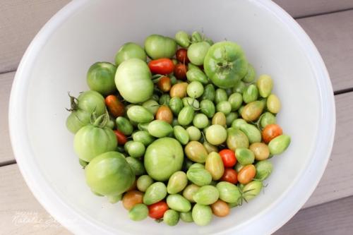green tomato harvest